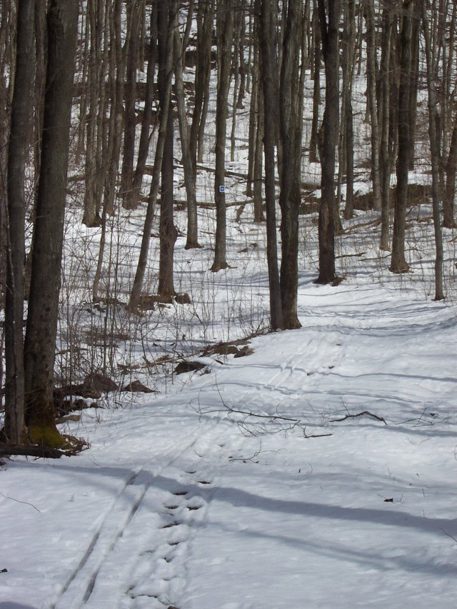 Gatineau Park Skiing Conditions